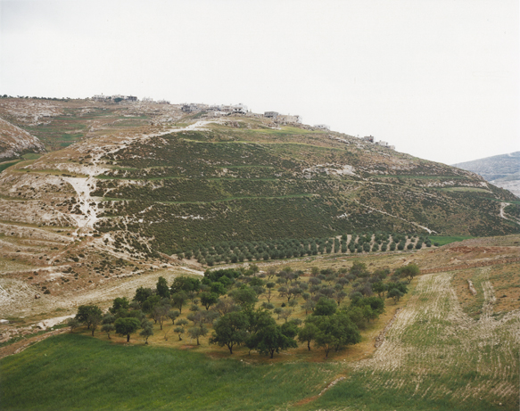 The Grove, Beit Sahur, Palestine 2001